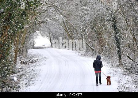 Faible neige tombant sur road & teenage girl walking chien sur scène couverte de neige plomb country lane dans les arbres forestiers enneigés campagne de l'Essex England UK Banque D'Images
