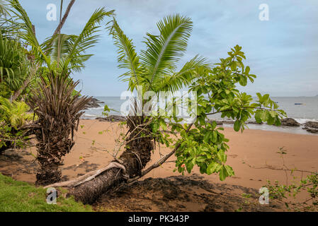 Plage, Parc national de Corcovado, péninsule d'Osa, au Costa Rica Banque D'Images