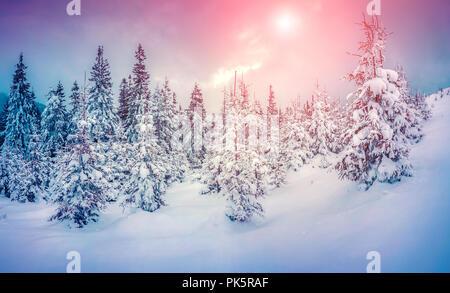 Scène d'hiver brumeux dans la montagne enneigée forêt. Instagram tonifiant. Banque D'Images