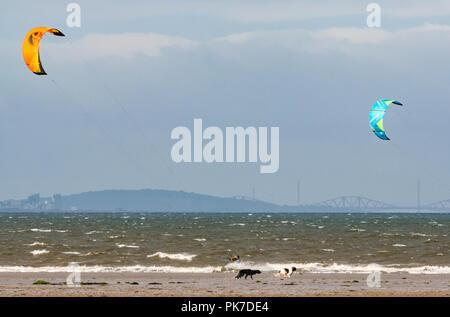 Longniddry Bents, East Lothian, Scotland, UK, 11 septembre 2018. Météo France: 40 mph winds sur une journée ensoleillée de créer de bonnes conditions de kite surfeurs colorés dans le Firth of Forth deux chiens courent le long de la plage avec le Forth bridges dans la distance Banque D'Images