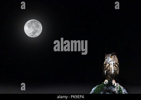 Pleine lune et étoiles sur le ciel nocturne avec owl perché sur la roche. Banque D'Images