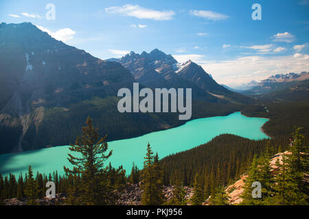Le lac Peyto de sommet Bow, Alberta Canada Banque D'Images
