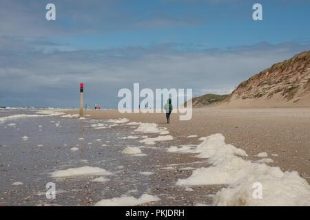 (Type d'algues Phaeocystis ) couvrent une plage de Texel, la plus grande des Waddeneilanden.