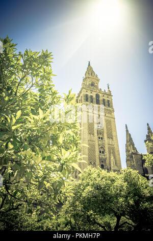 Soleil au Giralda de la cathédrale de Séville, Espagne, Europe Banque D'Images