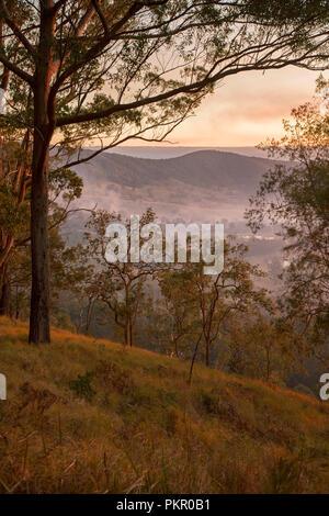Lever du Soleil avec ciel d'or et de brume couché dans vallée forêt à Tooloom National Park, NSW Australie. Banque D'Images