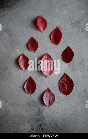 La composition minimale d'automne. Motif de feuilles automne rouge sur fond sombre, concept d'automne. Mise à plat, vue du dessus. Banque D'Images