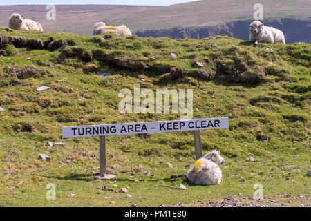 Les moutons se trouvent à côté d'un signe indiquant la zone de virage à la fin de la route, à l'Hermanness, sur l'île de. Unst, la route plus au nord en Grande-Bretagne
