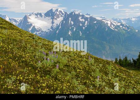 Spencer Banc Glacier, Alaska, la Forêt Nationale de Chugach. Banque D'Images
