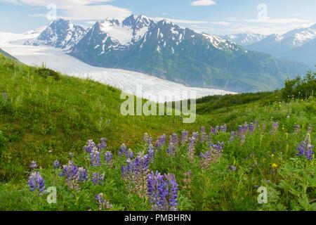Randonnée au Glacier Spencer, banc, la Forêt Nationale de Chugach Alaska. Banque D'Images