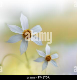 Fleur romantique invitation, carte de souhaits.dessin de fantaisie florale sur fond blanc mariage .Couleurs pastel.art numérique,la conception graphique. Banque D'Images