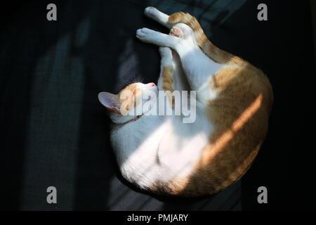 Après avoir joué au gingembre Cat