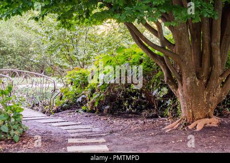 Un arbre dans le parc. Banque D'Images