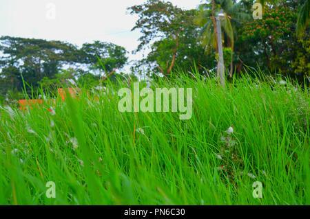 Image Full HD beauté naturelle du Bangladesh Banque D'Images