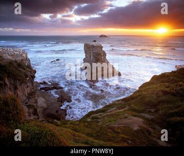 La Nouvelle-Zélande. L'Île du Nord. Région d'Auckland. Muriwai Beach. Banque D'Images