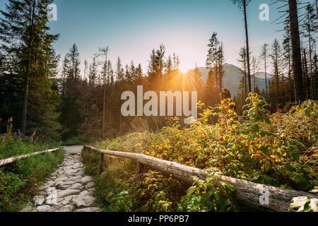 Parc National des Tatras, en Pologne. Lever du soleil au-dessus des sentiers de randonnée en été Tatras Paysage. Soleil du matin avec la lumière du soleil à travers les arbres en Tatr Banque D'Images