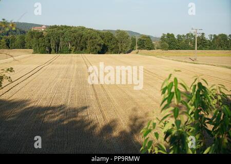 Champ de céréales récoltées en été en Allemagne Banque D'Images