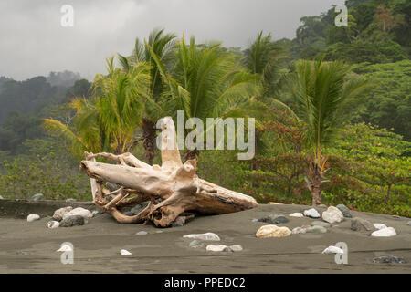 Scènes de plage, parc national de Corcovado, péninsule d'Osa, au Costa Rica Banque D'Images