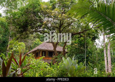 Forêt tropicale, parc national de Corcovado, péninsule d'Osa, au Costa Rica Banque D'Images