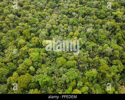 Forêt tropicale, Parc National de Tortuguero, Costa Rica Banque D'Images