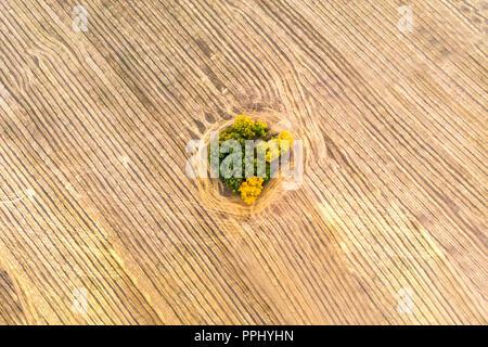 Une vue de dessus de la forêt d'automne les forêts et un champ agricole dans la forêt. La récolte sur un champ de blé. Des provisions de foin pour l'hiver. Russie Banque D'Images