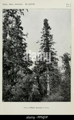 Botanische Jahrbücher und Systematik fourrure, Pflanzengeschichte Pflanzengeographie Banque D'Images