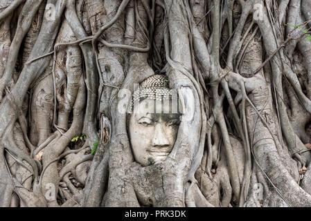 Tête de Bouddha en pierre intégrées dans des troncs d'arbres à feuillage vert dans la ville d'Ayutthaya