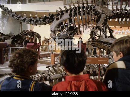 Les garçons à la recherche d'un reptile préhistorique au Musée d'histoire naturelle pour une histoire sur les enfants visiter Washington DC Photo par Dennis Brack bb24 Banque D'Images