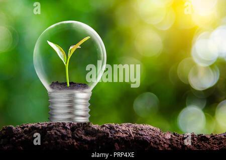 L'ampoule est situé à l'intérieur avec les feuilles et les arbres forestiers sont dans la lumière. Concepts de la conservation de l'environnement et le réchauffement de la plante g Banque D'Images