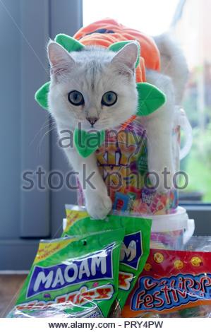 Chat déguisé en citrouille pour l'halloween et de protéger les bonbons pour les enfants Banque D'Images