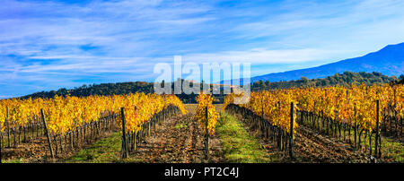 Paysage d'automne impressionnant,avec vue sur vignes colorées,région du Chianti, Toscane,Italie. Banque D'Images