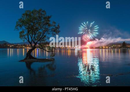 L'arbre isolé dans le lac Wanaka avec feu d'artifice pour le Nouvel An, Wanaka, Queenstown Lakes District, région de l'Otago, île du Sud, Nouvelle-Zélande, Banque D'Images