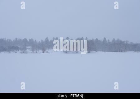Horizon indistinct des arbres, regardant à travers une tempête de neige, le lac Dow, Ottawa, Ontario, Canada Banque D'Images