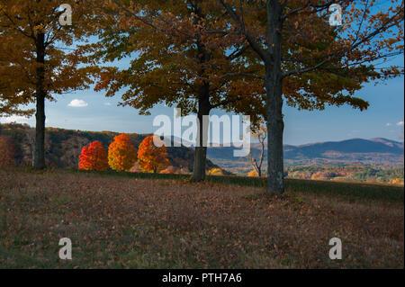 La couleur de l'automne dans la région de Berkshire Hills, dans l'ouest, le soir avec l'éclairage solaire trois arbres et paysage lointain avec ses couleurs vives Banque D'Images