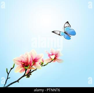 Beau papillon sur fleur rose magnolia, le fond de ciel.