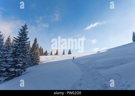 Paysage d'hiver d'à pied de la 'Rusinowa Polana' - glade dans les montagnes Tatras, Pologne Banque D'Images
