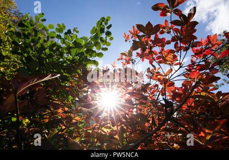 12 octobre 2018, Berlin, Berlin: 12 octobre 2018, Allemagne, Berlin: les feuilles d'automne peut être vu à l'encontre de la lumière du soleil. Le thermomètre affiche plus de 24 degrés Celsius dans certaines régions de NRW sur cette chaude journée d'octobre. Photo: Friso Gentsch/dpa Banque D'Images