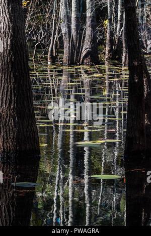 Réflexions d'arbres dans l'étang avec des nénuphars flottant Banque D'Images