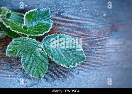 Feuilles en hiver tôt le matin - heure bleue - après une forte gelée, avec possibilité d'ajouter du texte ou des graphiques. Edge brouille et vignette ajouté pour l'effet. Banque D'Images