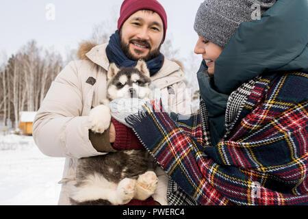 Taille portrait of happy couple moderne jouant avec mignon chiot Husky à l'extérieur en hiver, l'accent sur Asian man smiling at camera Banque D'Images