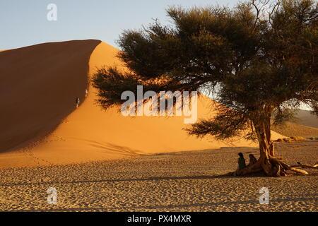 Kameldorn Namib-Dünenmeer neben Düne, 45, la Namibie, Afrika