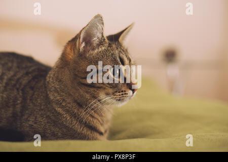 Photo de beau jeune chat couché sur le lit.