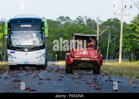 Cuba's Challenge sur la nature - le tourisme va écraser des crabes et autres animaux sauvages indigènes, et s'être perdu? Paradis Banque D'Images