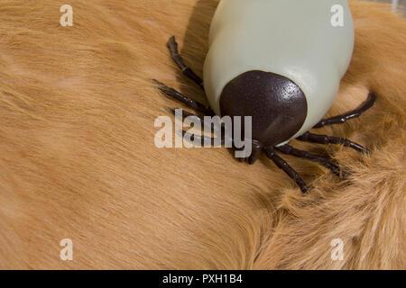 Grand Encéphalite artificiel tique sur fourrure de chien golden retriever