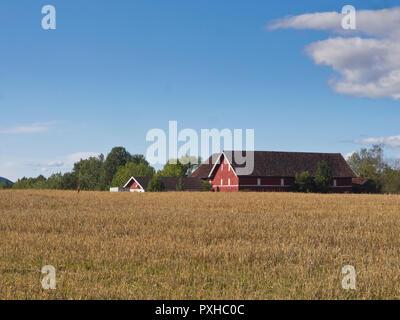 Bâtiments de ferme rouge sur un champ de grain, une vue typique dans les régions rurales de la Norvège, ici dans l'ouest d'Oslo Asker Banque D'Images