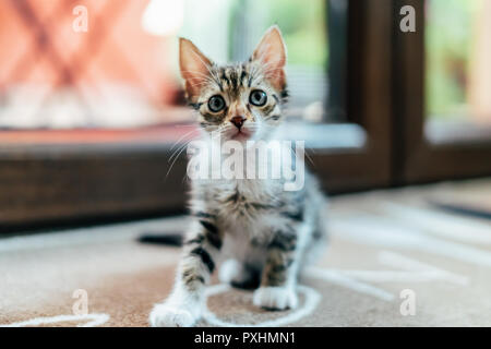 Cute Baby Cat Woman at Home