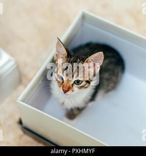 Mignon bébé chat dans Petite boîte à la maison Banque D'Images