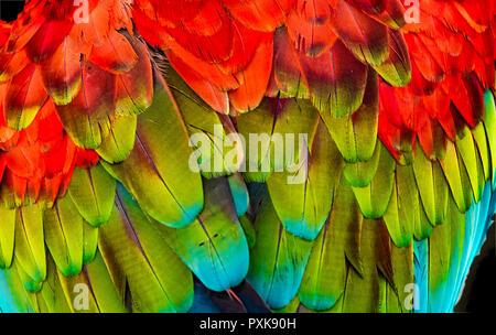 Rouge Vert Macaw Ara Aile Verte Plumes de fond Abstract Banque D'Images