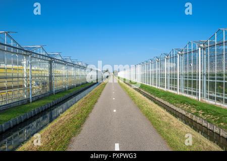 Vue en perspective des serres en verre industriel dans l'Netehrlands. Banque D'Images
