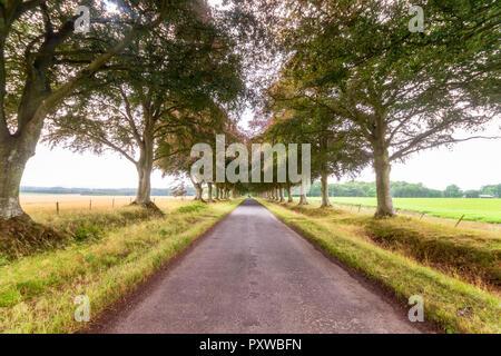 Royaume-uni, East Lothian, vide, bordé d'arbres, Banque D'Images