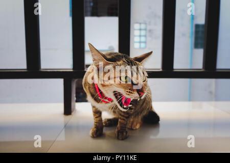 Le chat sauvage est très en colère Banque D'Images